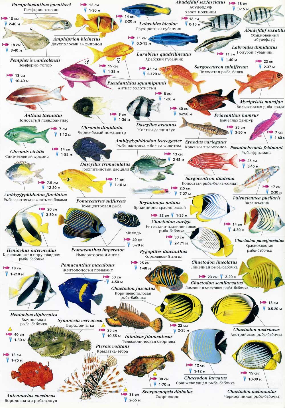 названия и фото рыб